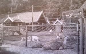 dierenparkje